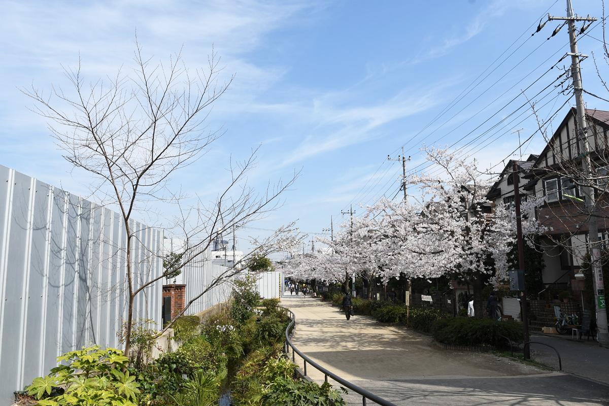 この写真の左側に桜の木がありましたが、工事に伴い伐採されました