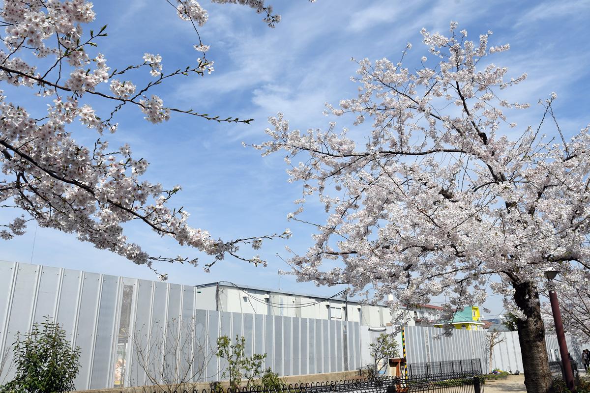 ここに代沢小学校があるのが当たり前でしたので、ちょっと寂しいですね