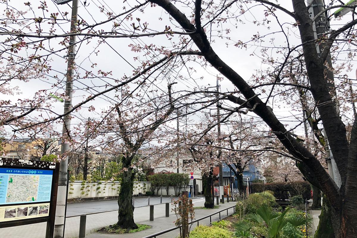 北沢川緑道の環七寄りの状況