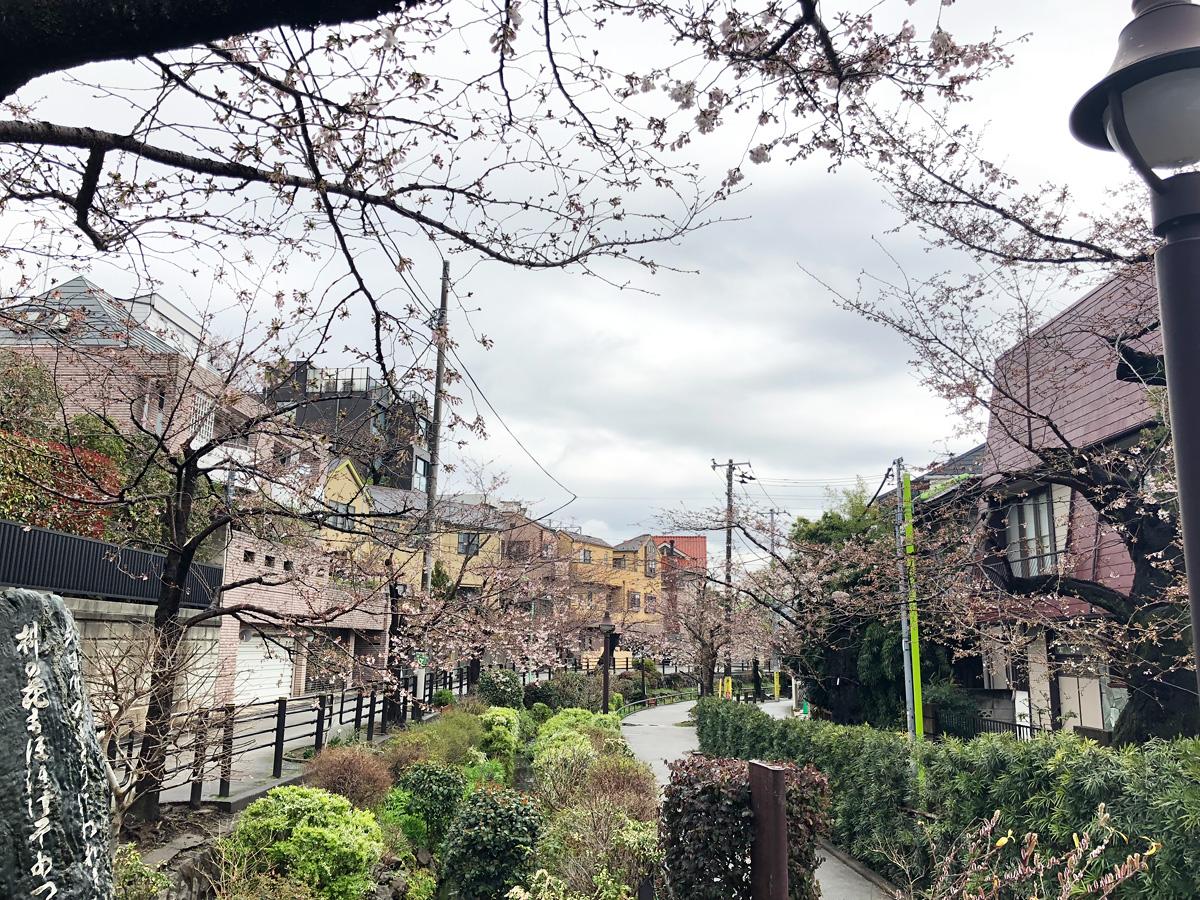 北沢川緑道斉藤茂吉歌碑のあたりの状況