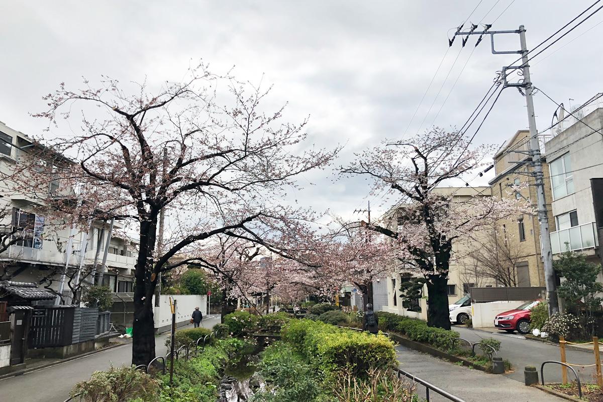 木によって開花状況のばらつきがかなりあります