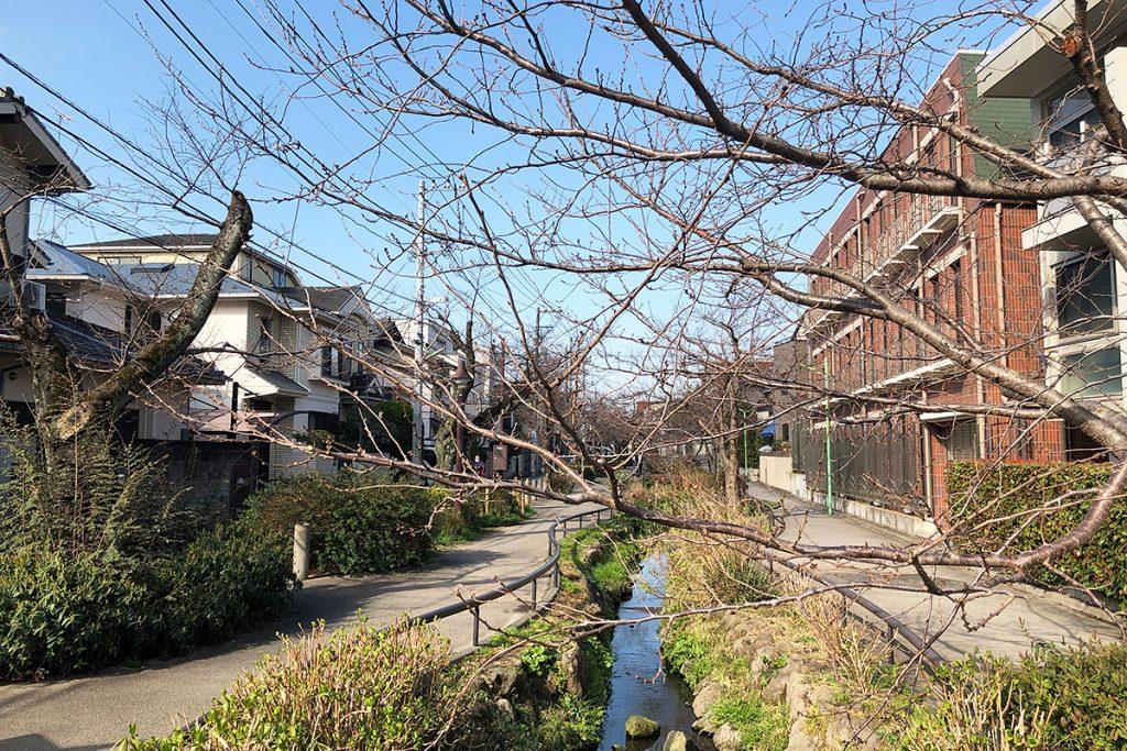 緑道の反対側、まだ、桜の気配は感じられないですね