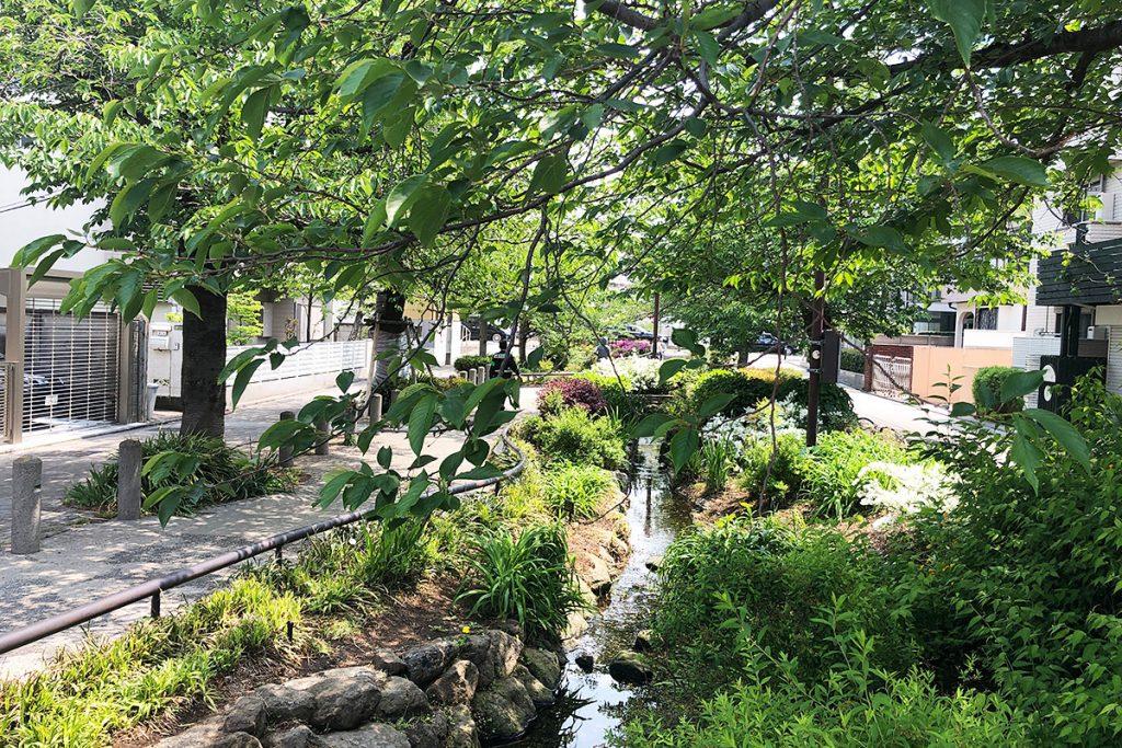 新緑があふれる、北沢川緑道
