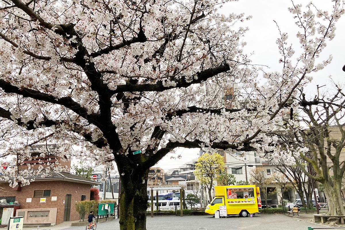 もう、桜は散っちゃいましたね
